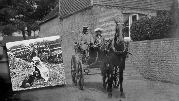 Couple on a horse and cart