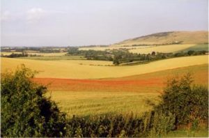 View of the Sussex Countryside